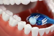 A toothbrush inside false teeth.