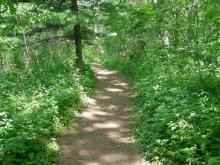 A trail at Wapsi Center.