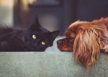 dog and cat laying on step