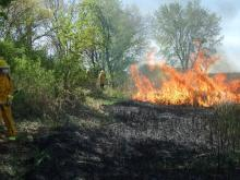 A controlled fire burn at Nahant Marsh.