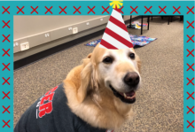 A golden retriever wearing a birthday hat.