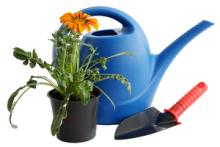 This is a picture of a watering can and plant.