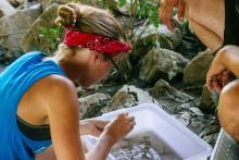 Volunteer is sampling water.