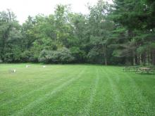 A field for camping