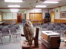 An owl on display in the eco room.
