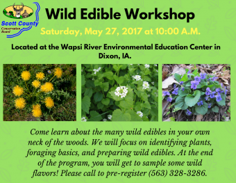 Wild Edible plants workshop at Wapsi River center flyer