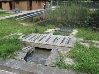 An old swimming pool turned into a pond.