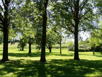 A picnic area surrounded by trees.