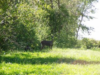 A deer look our way.