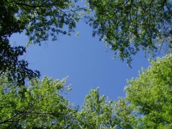 Looking up at the sky in between the trees.