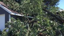 Storm damage tree resting on garage roof.